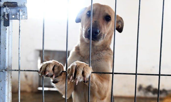 util e interesante como denunciar maltrato animal peru n325121 696x418 502090